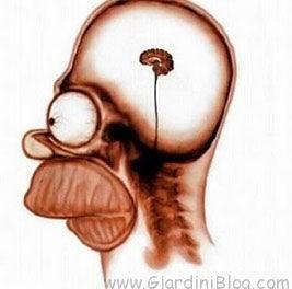 homer cervello
