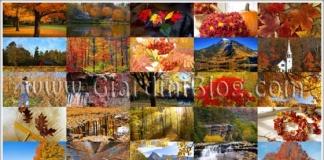 sfondi autunno