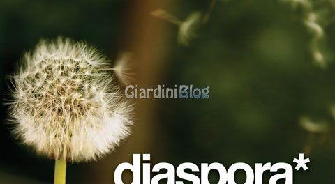 diaspora-dandy-logo