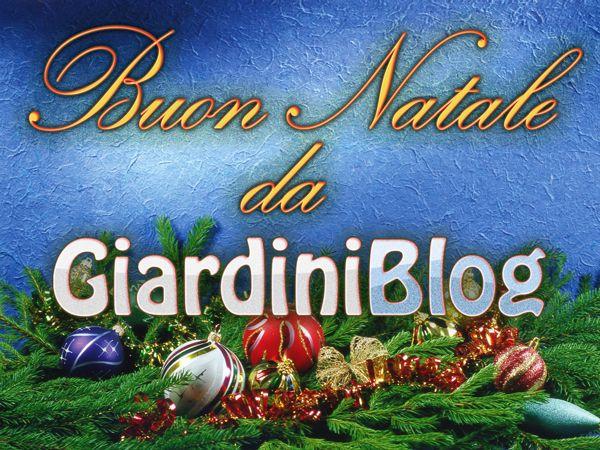 buon-natale-2011-da-giardiniblog