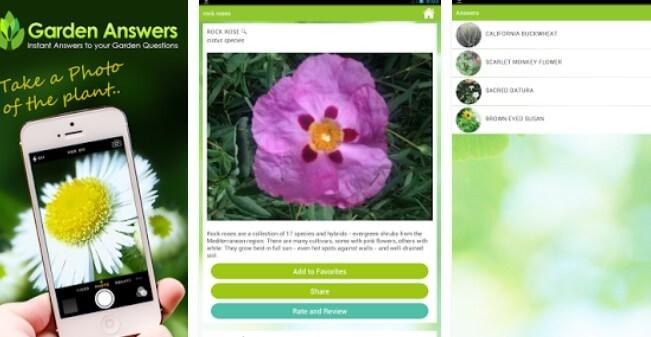 Garden Answers Plant Identifier