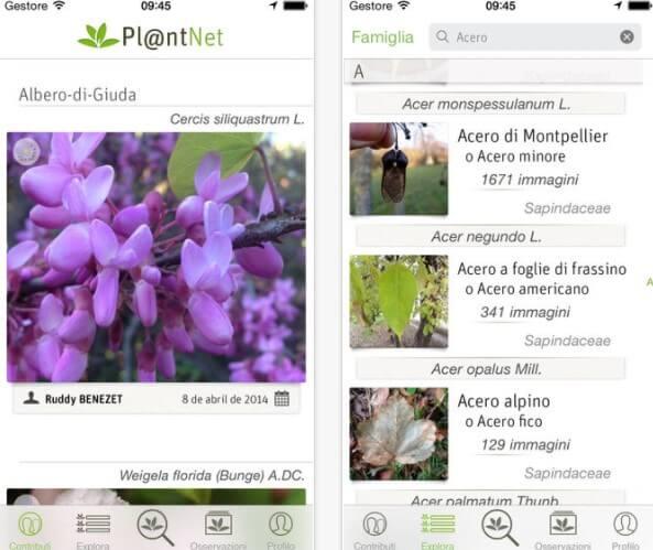 identificare piante e fiori con PlantNet
