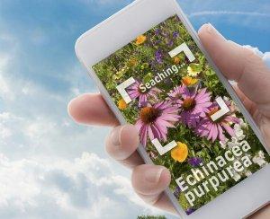 Come riconoscere le piante con le app per Android e iPhone