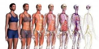 I migliori siti di anatomia