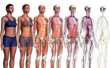 I migliori siti e app di anatomia umana in 3D