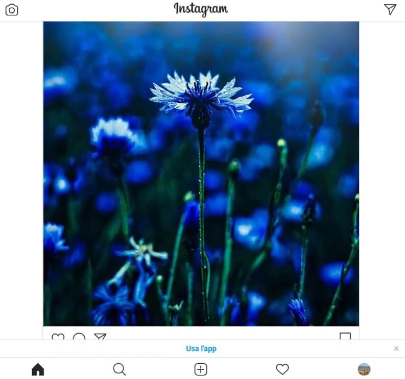 Instagram Web Come App