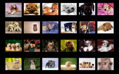 Foto e Wallpaper di Cuccioli (Immagini Collection)